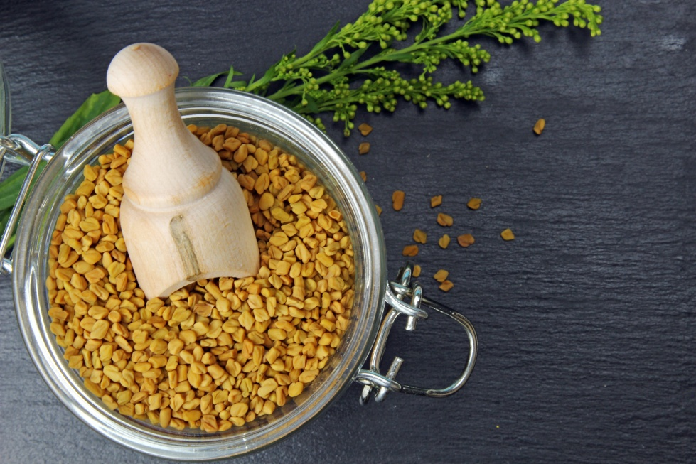 Fenugreek seeds in a jar on grey background